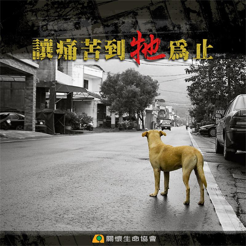 7. 率先推動流浪動物絕育「讓痛苦到牠為止」 1996年起與獸醫院共同推動流浪動物絕育「讓痛苦到牠為止」。2003年12月針對公立收容所狗吃狗事件,召開「安樂死真相記者會」,發起十萬人街頭連署運動、遊行抗議,呼籲「以絕育代替安樂死」。2008年出版紀實影片,見證動保團體長期實施「TNR」的成效。呼籲政府應當減少安樂死的數量,將昂貴的捕捉撲殺經費,轉而撥向低成本的絕育工作,以人道的方式解決流浪動物的問題。