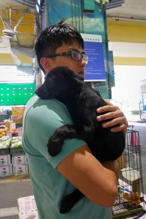 花市送養活動中,藍啟宇抱著小狗找家。(拍攝:蔡育琳)